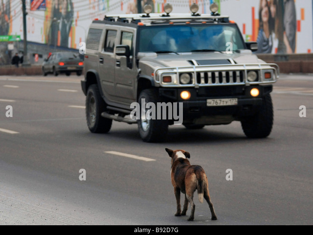 feral dogs in moscow a stray dog stock photos a stray dog stock images alamy