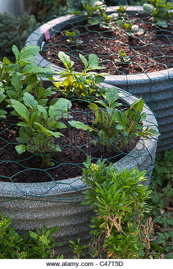 Chicken wire plant stock photos chicken wire plant stock - How to keep squirrels from digging in garden ...