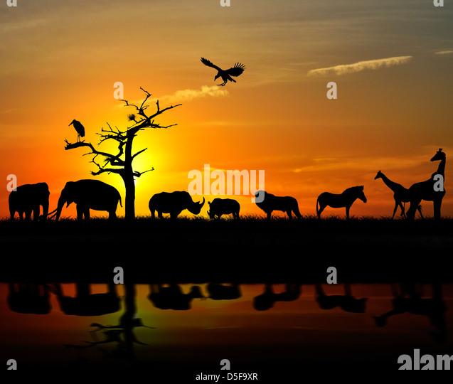 Africa Landscape Animal Sunset Tree Stock Photos & Africa ...