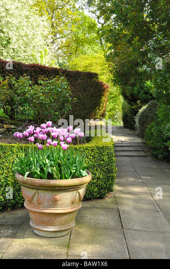 Kiftsgate Garden, Gloucestershire   Large Terracotta Pot With Tulips    Stock Image