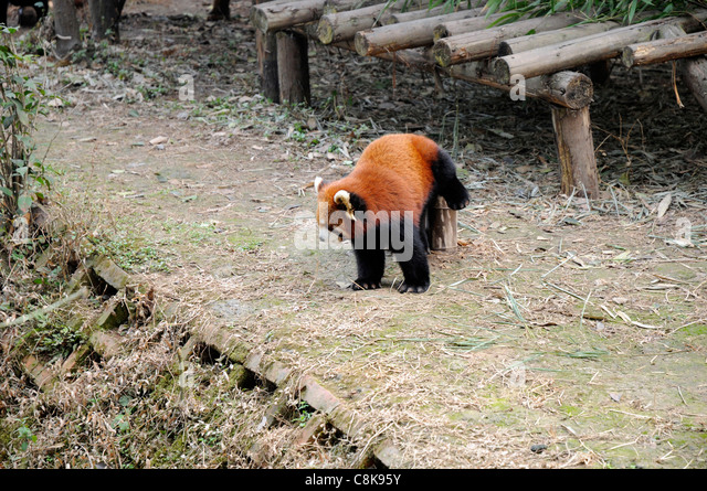 fulgens or shining - photo #14