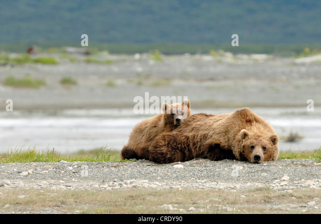 Belly River Stock Photos & Belly River Stock Images - Alamy