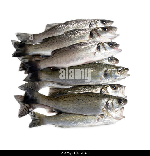 Bass fish cut out stock images pictures alamy for Bass fish cooking
