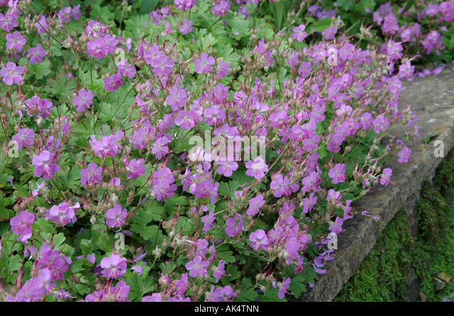 Cantabrigiense Stock Photos Cantabrigiense Stock Images
