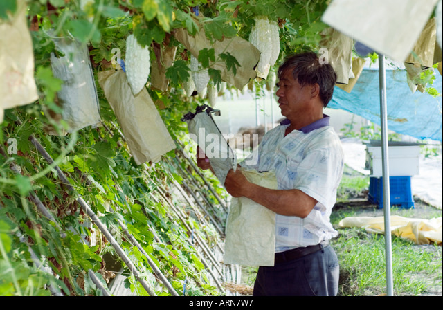 bitter gourd research paper Indian agricultural research institute new delhi, 110012, india  bitter melon before entering india  bitter gourd: botany, horticulture, breeding .