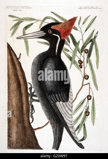 Extinct Bird Stock Photos & Extinct Bird Stock Images - Alamy
