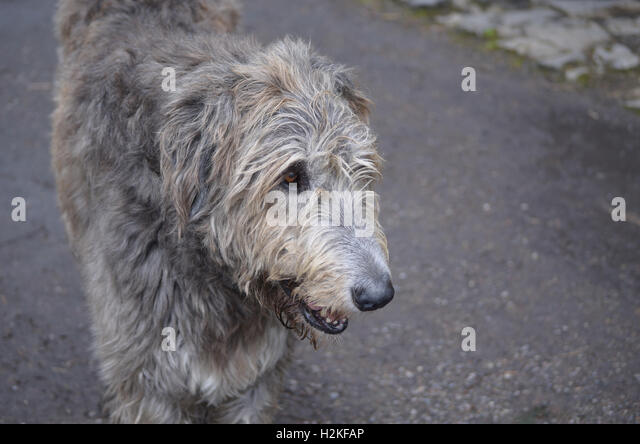 Silver Fur Stock Photos & Silver Fur Stock Images - Alamy