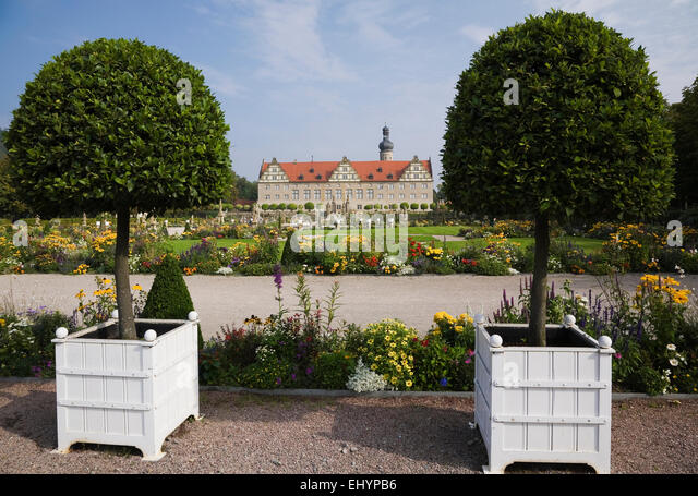 Trimmed deciduous trees in box planters in the grounds of Schloss  Weikersheim Palace, in late