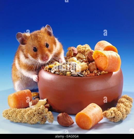Hamster Eating Food