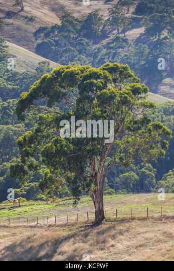 Adelaide suburbs stock photos adelaide suburbs stock for Adelaide hills landscape