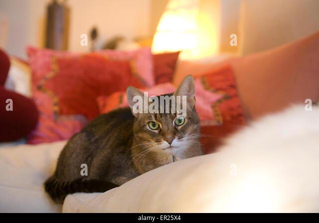 Wohnlich Stock Photos Wohnlich Stock Images Alamy