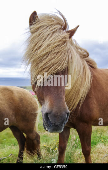 long manes stock photos - photo #31