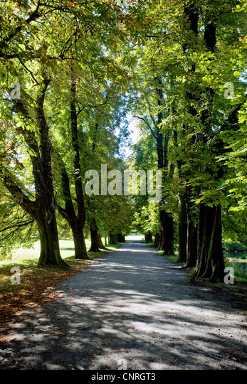 avenue germany stock photos avenue germany stock images alamy. Black Bedroom Furniture Sets. Home Design Ideas
