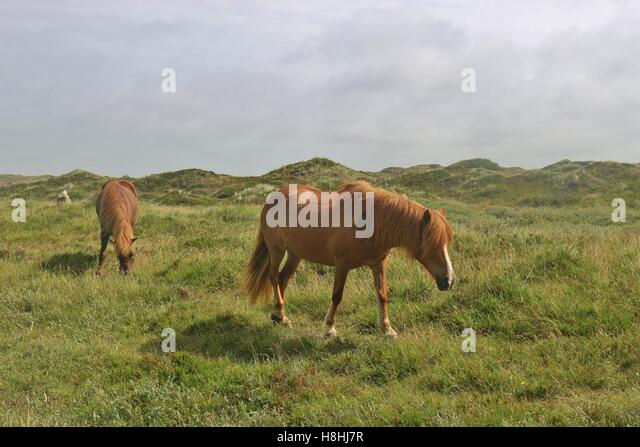 long manes stock photos - photo #16