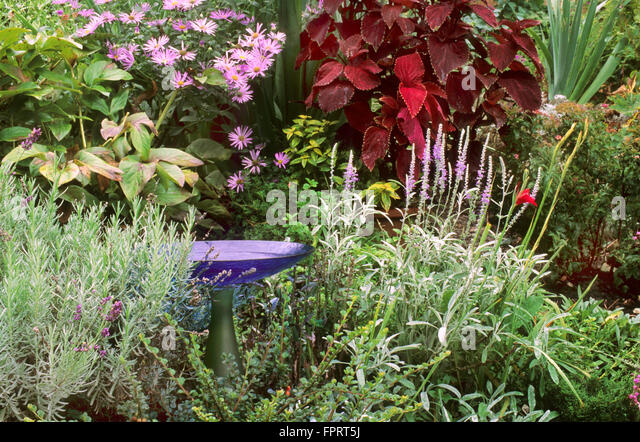 Glass Birdbath In Garden Setting With Coleus, Aster, Lavender, Cotoneaster    Stock Image