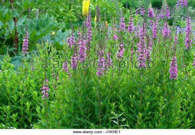 Floraison estivale stock photos floraison estivale stock for Fleurs dans un jardin