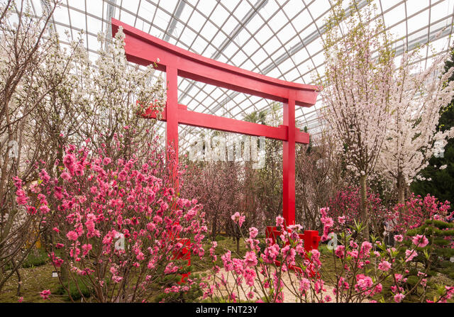 decoration of cherry blossom event at gardens by the bay singapore stock image
