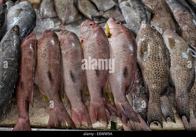 Wet fish stall stock photos wet fish stall stock images for Daily fresh fish