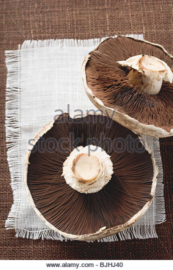Portobello mushrooms from below - Stock Image
