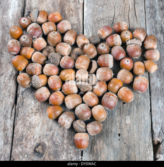 how to keep acorns fresh