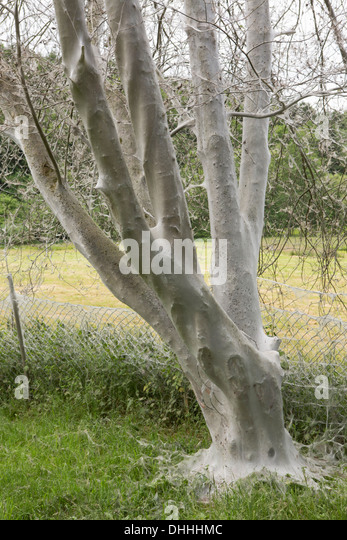 Cocooned Stock Photos Amp Cocooned Stock Images Alamy