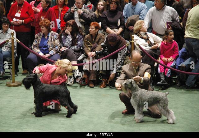 Westminster Dog Show Stock Photos Westminster Dog Show Stock Images Alamy