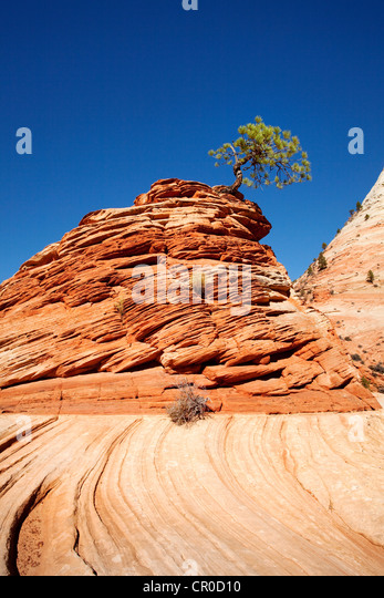 And pine stock photos amp sandstone and pine stock images alamy