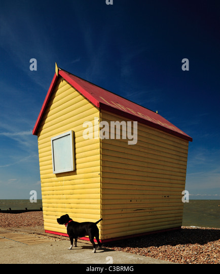Tankerton Beach Dogs
