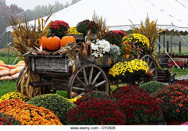Autumn Decorations autumn decorations stock photos & autumn decorations stock images