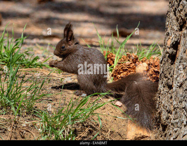 Abert Stock Photos & Abert Stock Images - Alamy
