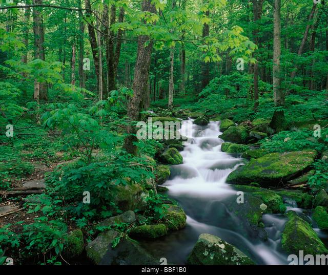 Appalachian Forest Stock Photos Amp Appalachian Forest Stock