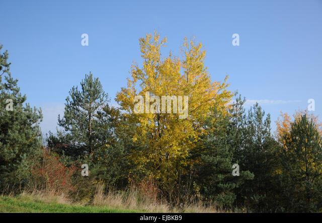 trees summer alaska - photo #32