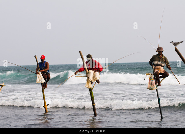 Traditional stilt fisherman at kogalla stock photos for Sri lanka fishing