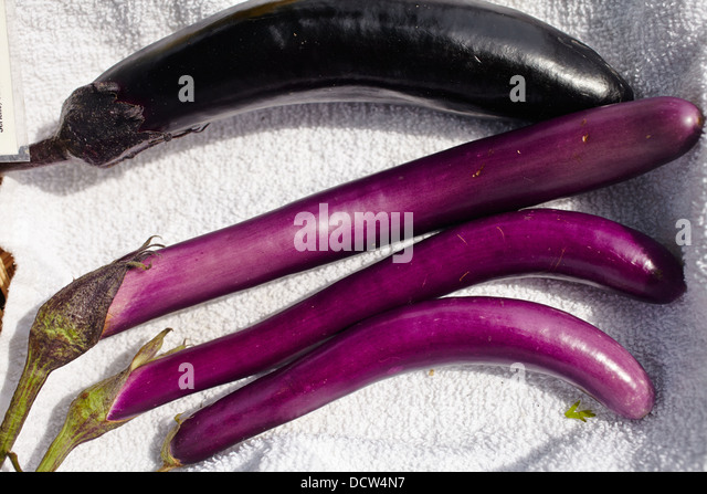eggplant ripe how to tell