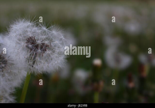front of letter header stock photos amp header stock images alamy 21493