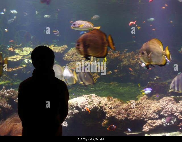 boulogne sur mer nausicaa stock photos boulogne sur mer nausicaa stock images alamy