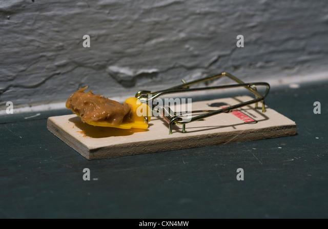Mouse Trap Peanut Butter Mouse Trap