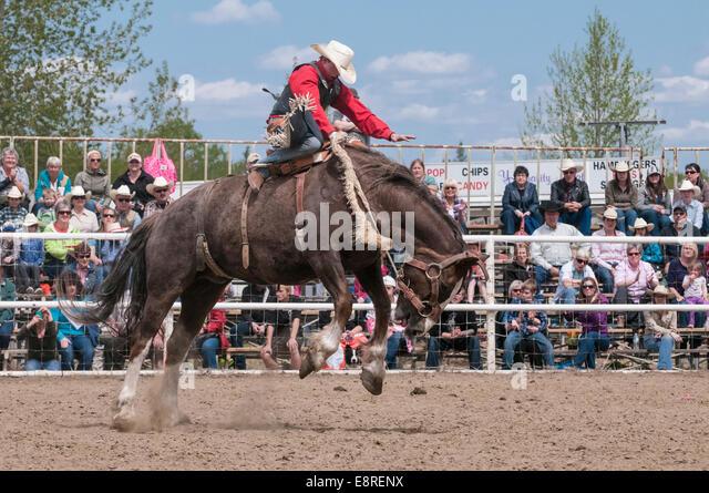 Saddle Bronc Riding Stock Photos Amp Saddle Bronc Riding