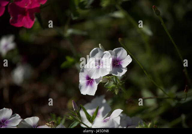 White Flowers Grown With Weeds Stock Photos & White Flowers Grown ...