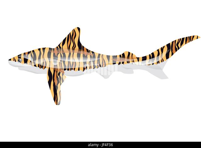 Tiger Shark Cut Out Stock Images  Pictures  Alamy