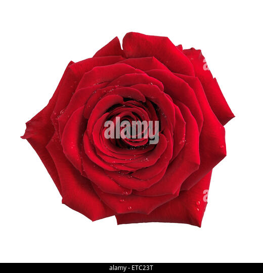Single red rose cut out stock photos single red rose cut for Individual rose petals