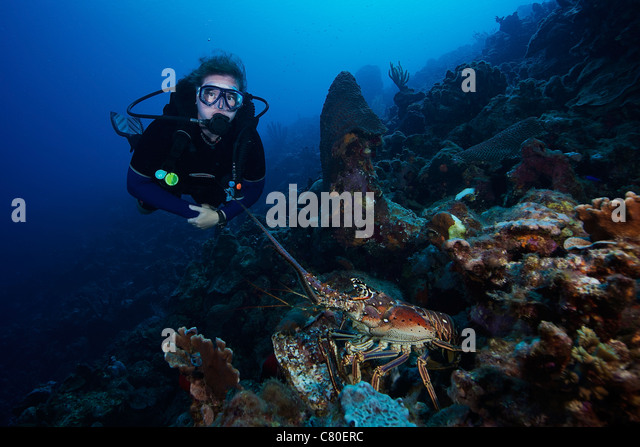 Lobster Divers Stock Photos & Lobster Divers Stock Images - Alamy