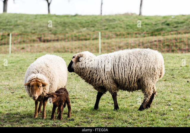 Hookup the black sheep of the family
