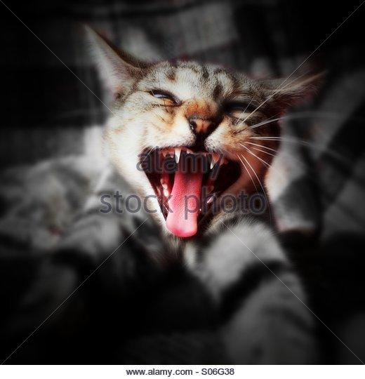 cat-with-attitude-s06g38.jpg