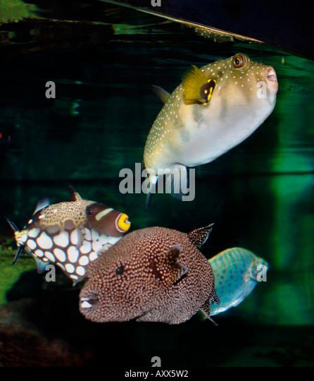 Saltwater fish aquarium stock photos saltwater fish for Tropical fish species