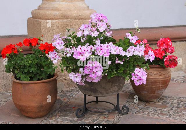 Terra cotta flower pots stock photos terra cotta flower pots stock images alamy - Care geraniums flourishing balcony porch ...