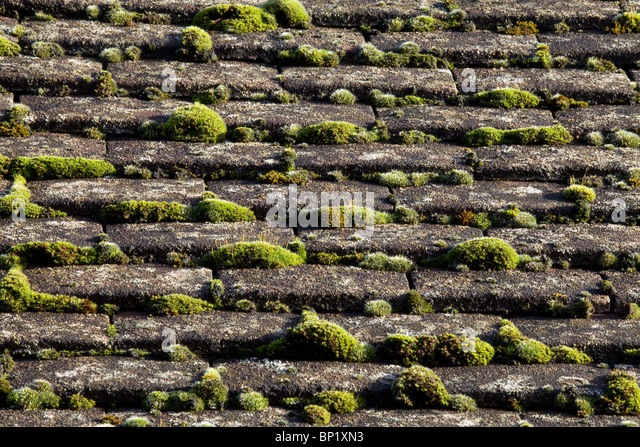 Moss On Roof   Stock Image
