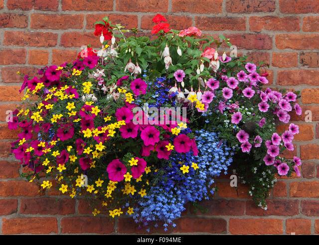 Flower Varieties For Hanging Baskets : Hanging basket uk garden stock photos