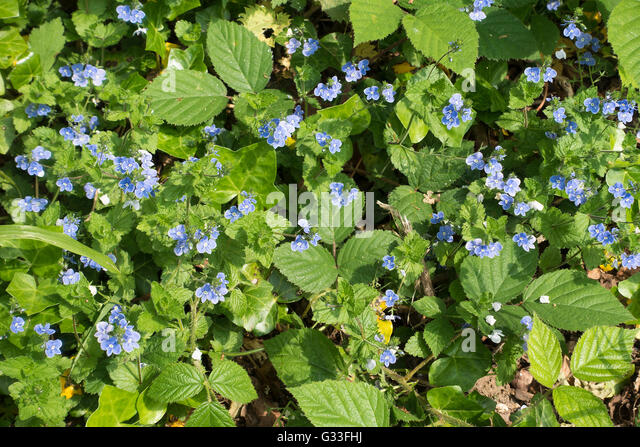 Wild Flowers Garden Uk Stock Photos Wild Flowers Garden Uk Stock