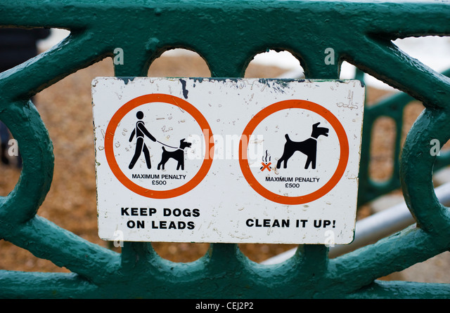 how to keep a dog clean